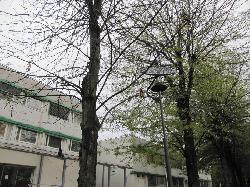 SZNS-MONO-8WD1-2012 típusú napelemes kandeláberek biztosítanak sétányvilágítást Százhalombattán az Egészségügyi Központ előtti téren.